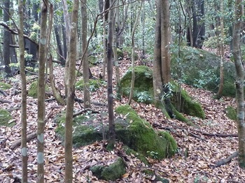P1090951支尾根分岐点・小岩が散在.JPG