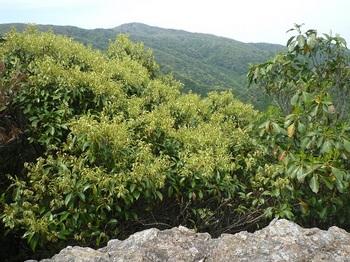 P1090980展望岩・天井ヶ岳.JPG