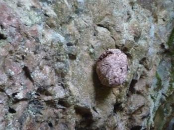 P1100007スズメバチの巣.JPG