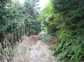 P1100015荒れ林道.JPG