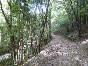 P1100025渓谷沿いの林道.JPG