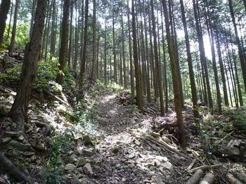 P1100033林道.JPG