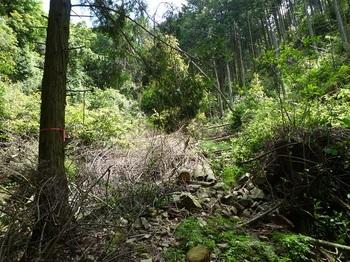 P1100038荒れた支谷を登る.JPG