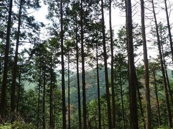 P1100042支尾根上から樹間に白滝山方面.JPG