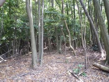P1100043支尾根方向の雑木疎林.JPG