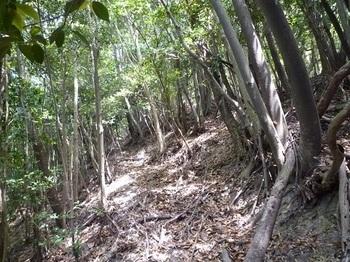 P1100044巻き道の旧山道.JPG