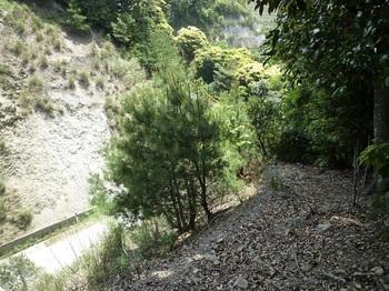 P1100054林道法面のガケ上に出る.JPG