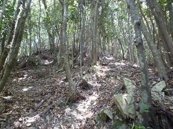 P1100065 角石の多い急登.JPG