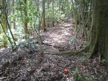 P1100184尾根道・左植林帯.JPG