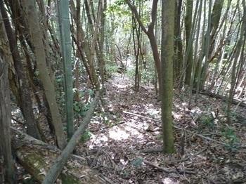 P1100192竹林の尾根道.JPG