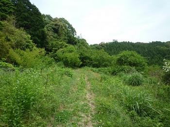 P1100212草被り道.JPG