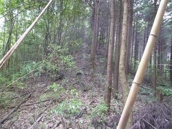P1100228西尾根・植林境.JPG