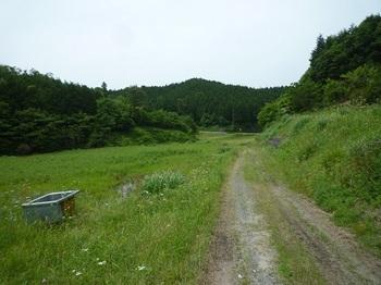 P1100230耕作放棄地・林道.JPG