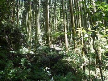P1100257植林谷の巻き道を進む.JPG