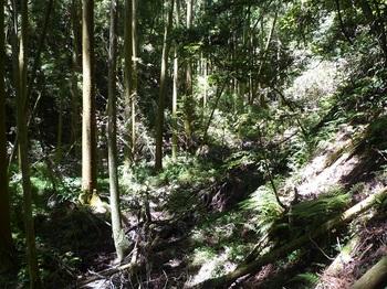 P1100262谷を挟んで反対側の山際へ逃げる.JPG