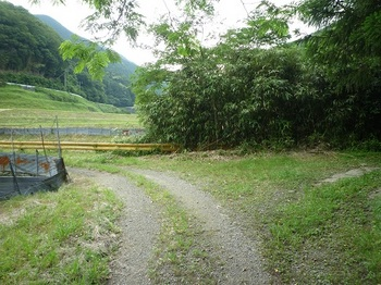 P1100387林道右へ.JPG
