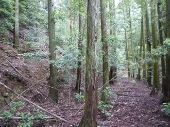 P1100406植林帯の山道.JPG