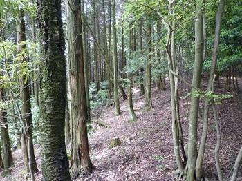 P1100429植林境(逆方向).JPG