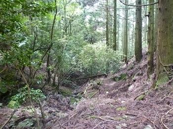 P1100442沢沿いの山道.JPG