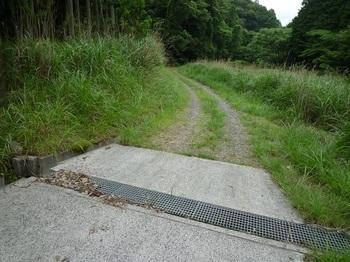 P1100452林道.JPG