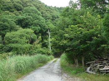 P1100461林道長浴線.JPG