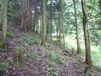 P1100479谷沿いの山道.JPG