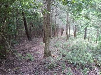 P1100518 380m小ピークからの下り・植林境.JPG