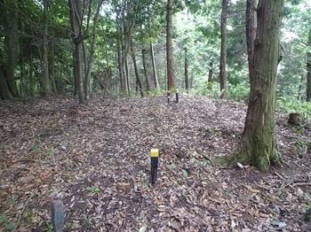 P1100525 380m小ピーク・国土調査プラ杭(黄).JPG