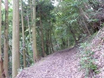 P1100572植林帯沿いの林道.JPG