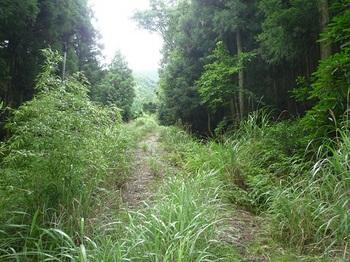 P1100578草被りの林道.JPG