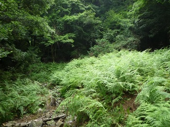 P1100585草被り山道、沢を渡る.JPG