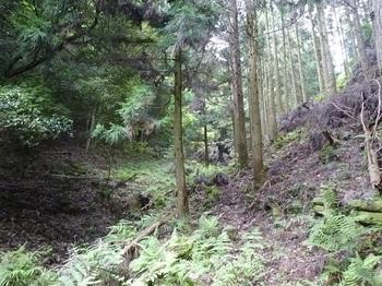 P1100591植林帯.JPG