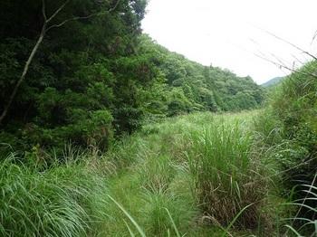 P1100623草被り林道.JPG