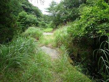 P1100626コン橋4・林道合流点.JPG