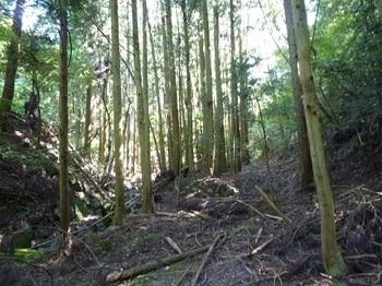 P1100644荒れ林道.JPG