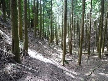 P1100688ヒノキ植林帯のそま道.JPG