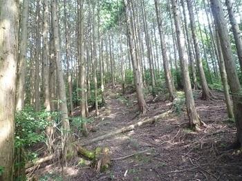 P1100750山道.JPG