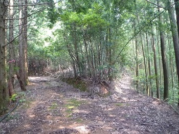 P1100758山道(右)分岐.JPG