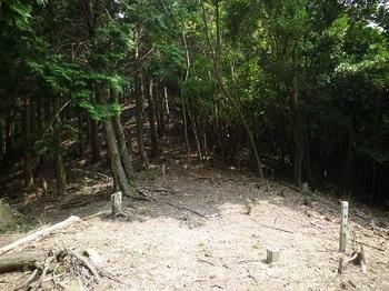 P1100765三角点から植林境尾根.JPG
