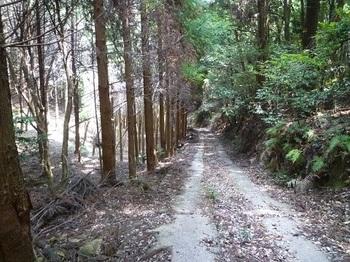 P1100817部分舗装の林道.JPG