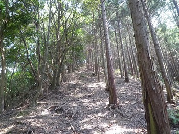 P1100935ヒノキ林境.JPG