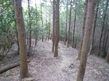P1100941ヒノキ植林境.JPG