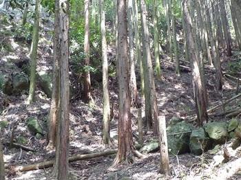 P1100965ヒノキ林沿いの通信施設への踏み跡.JPG