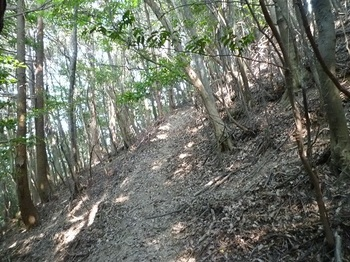 P1100994山道.JPG