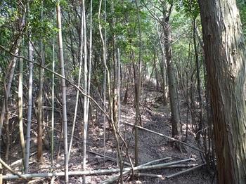 P1110003鞍部から290mピーク方向・雑木疎林.JPG