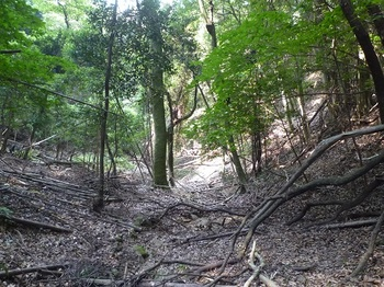 P1110009 左(西側)の谷.JPG