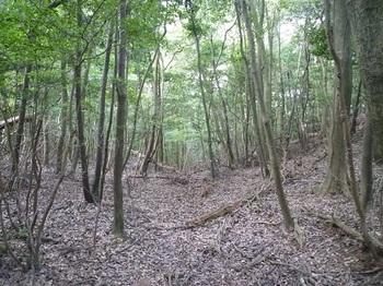P1110017左(西側)の谷.JPG