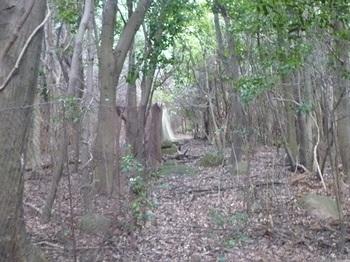P1110019植林(左)・ネット.JPG