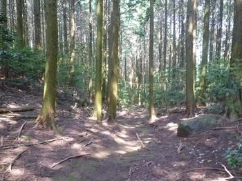 P1110024植林帯の幅広山道.JPG