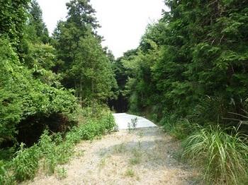 P1110032林道(一部コンクリート道).JPG
